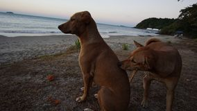 Hunden på stranden, hunden på havet Arkivfoton