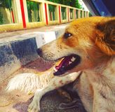 Hunden poserar royaltyfri fotografi