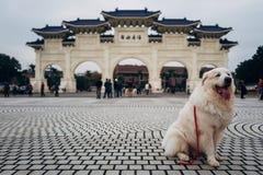Hunden poserar i framdel av Chiang Kai Shek Memorial Hall royaltyfria foton
