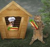 Hunden säljer varmkorvar royaltyfri foto