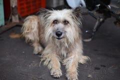 Hunden satt vänta på gatafolket med nostalgi royaltyfri fotografi