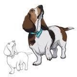 Hunden ser upp HundBasset Hund med en krage stock illustrationer