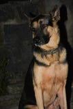 Hunden sitter Royaltyfri Foto