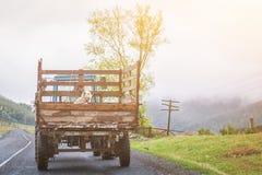Hunden sitter i baksidan av en gammal lastbil Arkivbilder