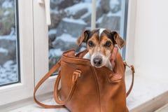 Hunden sitter i ett brunt dåligt och ser framlänges fotografering för bildbyråer