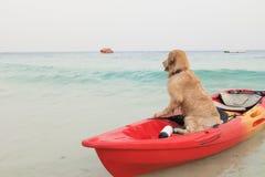 Hunden sitter i fartyget som väntar någon på havsstranden royaltyfria foton