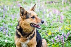Hunden sitter i skogen på en gräsmatta i mitt av vårflowers_ royaltyfri fotografi