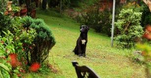 Hunden sitter i trädgård, Arkivbilder
