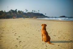 Hunden sitter på en solig sandstrand arkivbilder
