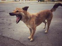 Hunden skäller Arkivfoton