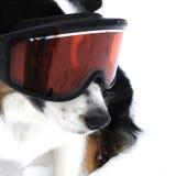 hunden skidar Fotografering för Bildbyråer