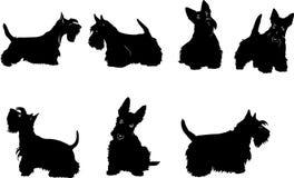 Hunden skissar, terriern, skotten, vit, svart, uppsättning arkivfoto