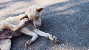 Hunden skrapade öronen Royaltyfri Fotografi