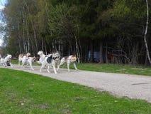 Hunden som sledding i sommar i, parkerar, den soliga dagen royaltyfri bild