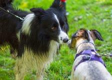 Hunden som spelar på, parkerar Royaltyfria Foton