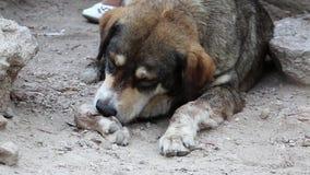 Hunden som tar bort taggen från henne, tafsar arkivfilmer