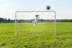 Hunden som underhållande målvakt sparar mål på fotbollfotbollfältet royaltyfri foto