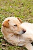 Hunden sover på grönt gräs Arkivbilder