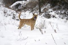 Hunden står på snö täckt fält vid träd Royaltyfria Bilder