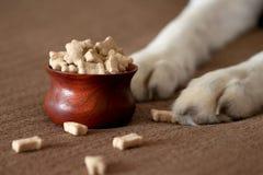 Hunden tafsar bredvid en bunke av hundkex Arkivfoto