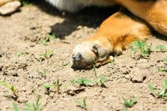 Hunden tafsar n?rbild fotografering för bildbyråer