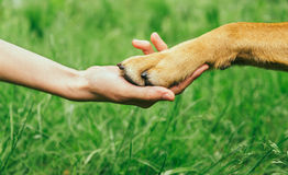 Hunden tafsar, och den mänskliga handen gör handskakningen Royaltyfri Bild