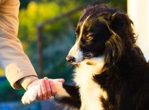 Hunden tafsar och den mänskliga handen som gör en utomhus- handskakning Arkivbilder