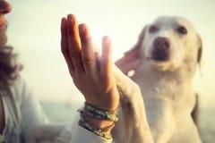 Hunden tafsar och mannens handgesten av kamratskap Royaltyfria Bilder