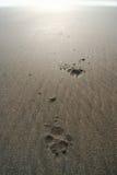Hunden tafsar tryck i sand fotografering för bildbyråer