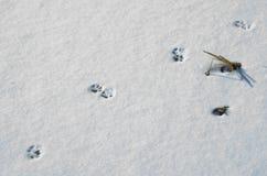 Hunden tafsar tryck på snö Royaltyfria Foton