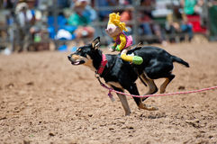 hunden turnerar Royaltyfri Fotografi