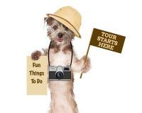 Hunden turnerar handboken med kameran och tecken arkivfoto