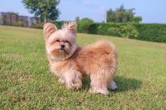 Hunden tycker om att spela i trädgården Fotografering för Bildbyråer