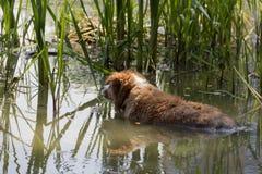 Hunden tycker om det kalla vattnet av sjön på en varm sommardag royaltyfria bilder