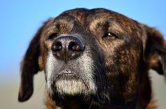 Hunden tystar ned Arkivfoton