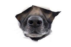 hunden tystar ned white royaltyfri fotografi
