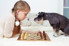 Hunden undervisar barnet att spela schack Din vänd Arkivfoto