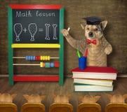 Hunden undervisar matematik till dess studenter royaltyfria foton