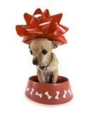 Hundenahrung Lizenzfreies Stockfoto