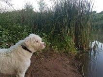 Hundenebenfluß Lizenzfreie Stockbilder