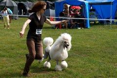 Hundeneigung Stockfoto