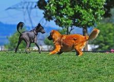 Hundeneue Freunde Lizenzfreie Stockfotografie