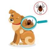 Hundeparasiten Tick On Dog In The-Pelz als Abschluss herauf Vektor der linearen Wiedergabe Verbreitung der Infektion Stockbilder