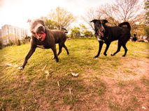 Hundepark Lizenzfreies Stockfoto