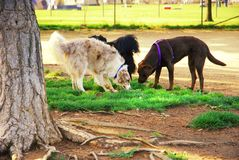 Hundepark Lizenzfreie Stockfotos