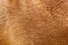 Hundepelz Lizenzfreie Stockfotos