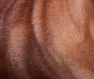 Hundepelz Lizenzfreies Stockfoto