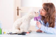 Hundepflegen Lizenzfreies Stockbild