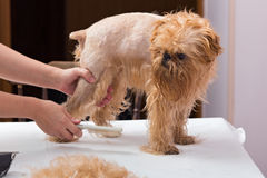 Hundepflegen Stockbild