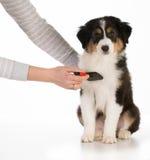 Hundepflegen stockfotografie